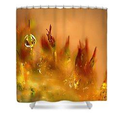 Golden Palette Shower Curtain