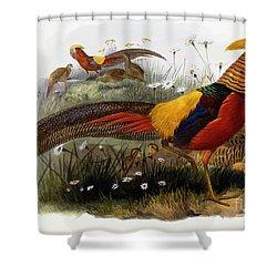 Golden Pheasants Shower Curtain by Joseph Wolf