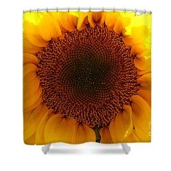 Golden Ratio Sunflower Shower Curtain by Kerri Mortenson