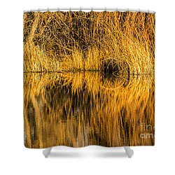 Golden Reflections Shower Curtain by Sue Smith