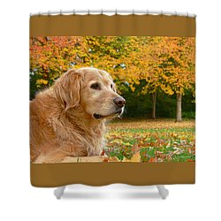 Golden Retriever Dog Autumn Leaves Shower Curtain by Jennie Marie Schell