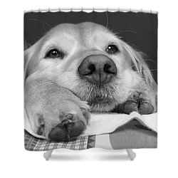 Golden Retriever Dog I See You Shower Curtain by Jennie Marie Schell