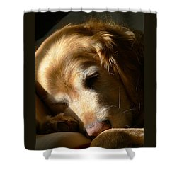 Golden Retriever Dog Sleeping In The Morning Light  Shower Curtain