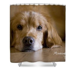 Golden Retriever Missing You Shower Curtain by James BO  Insogna
