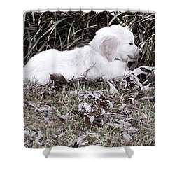 Golden Retriever Puppy 2 Shower Curtain by Andrea Anderegg