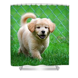 Golden Retriever Puppy Shower Curtain by Christina Rollo