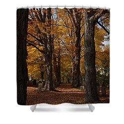 Shower Curtain featuring the photograph Golden Rows Of Maples Guide The Way by Jeff Folger