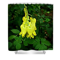 Shower Curtain featuring the photograph Golden Tears Vine by William Tanneberger