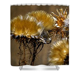 Golden Thistle Shower Curtain