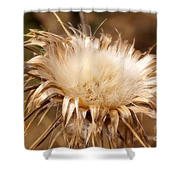 Golden Thistle Shower Curtain by Kerri Mortenson