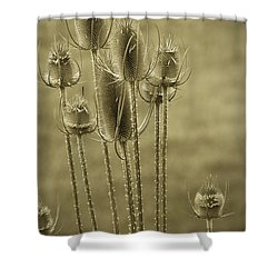 Golden Thistles Shower Curtain