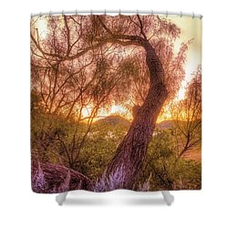 Golden Tree At The Quartz Mountains - Oklahoma Shower Curtain