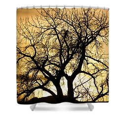 Golden Tree Sunset Silhouette Shower Curtain