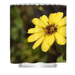 Golden Zinnia Shower Curtain by Photographic Arts And Design Studio