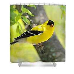 Goldfinch 299 Shower Curtain