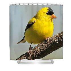 Goldfinch 306 Shower Curtain