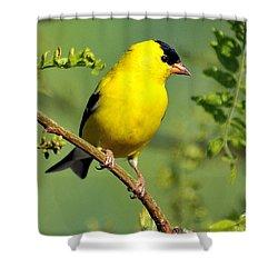Goldfinch 328 Shower Curtain