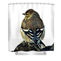 Goldfinch At Sunrise Shower Curtain