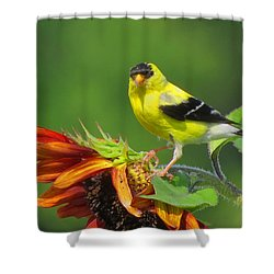 Shower Curtain featuring the photograph Goldfinch Pose by Dianne Cowen
