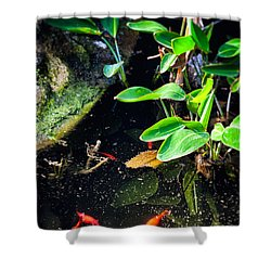 Shower Curtain featuring the photograph Goldfish In Pond by Silvia Ganora