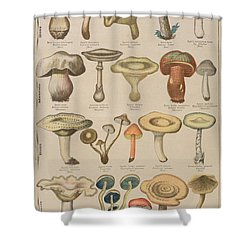 Good And Bad Mushrooms Shower Curtain by French School