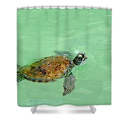 Shower Curtain featuring the photograph Good Day For A Swim  by Susan  McMenamin