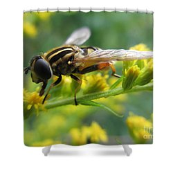 Good Guy Hoverfly  Shower Curtain by Martin Howard