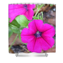 Shower Curtain featuring the photograph Good Morning by Andrea Anderegg