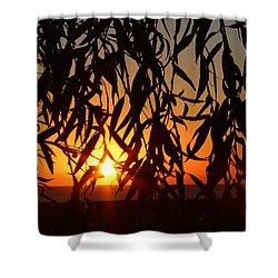 Good Morning Lake Michigan Shower Curtain