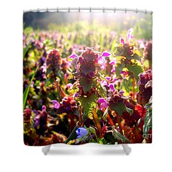 Shower Curtain featuring the photograph Good Morning by Nina Ficur Feenan