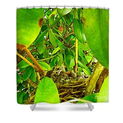 Good Morning Sunshine Shower Curtain by Robyn King