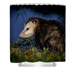 Shower Curtain featuring the photograph Good Night Possum by Olga Hamilton