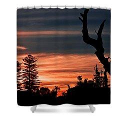 Shower Curtain featuring the photograph Good Night Trees by Miroslava Jurcik