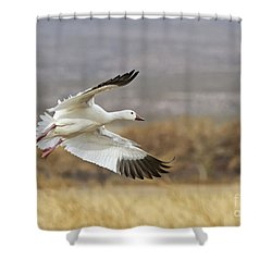 Goose Above The Corn Shower Curtain by Ruth Jolly