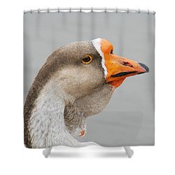 Goose Neck Wattle Shower Curtain by Bob and Jan Shriner