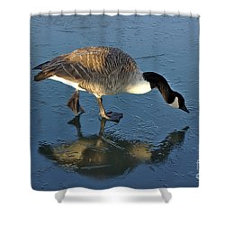 Goose On Ice Shower Curtain