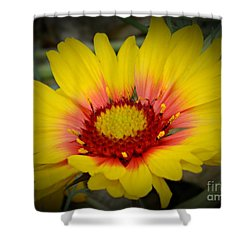 Gorgeous Daisy Shower Curtain by Chalet Roome-Rigdon