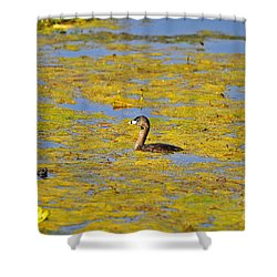 Gorgeous Grebe Shower Curtain by Al Powell Photography USA