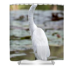 Gorgeous N Tall Great White Egret Shower Curtain by Sabrina L Ryan