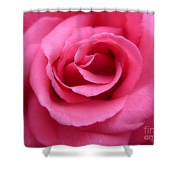 Shower Curtain featuring the photograph Gorgeous Pink Rose by Vicki Spindler