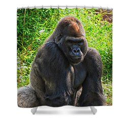 f4395897ada95 Silverback Gorilla Shower Curtains (Page  8 of 12)