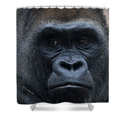 Gorilla Portrait Shower Curtain