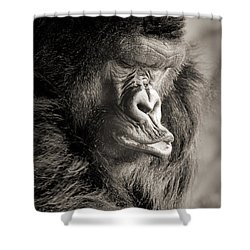 Gorilla Poses IIi Shower Curtain