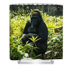Gorilla Sitting On A Stump Shower Curtain