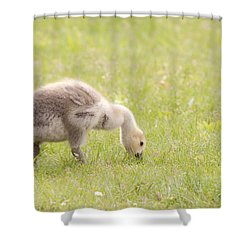 Shower Curtain featuring the photograph Gosling by Jeannette Hunt