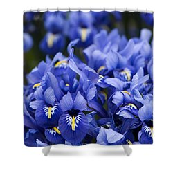 Got The Iris Blues Shower Curtain by Anne Gilbert