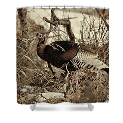 Gould's Wild Turkey Xii Shower Curtain