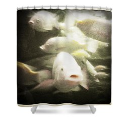 Gouramis Shower Curtain by Bradley R Youngberg
