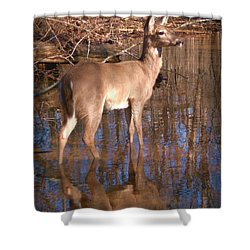 Grace Shower Curtain by Bill Stephens