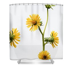 Shower Curtain featuring the photograph Graceful Beauty by Anita Oakley